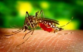 Exhortan a dominicanos no viajar a su país por el Zika