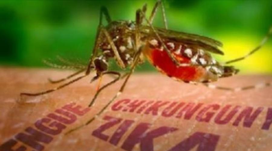 Un diagnóstico más rápido del zika, dengue y chikungunya