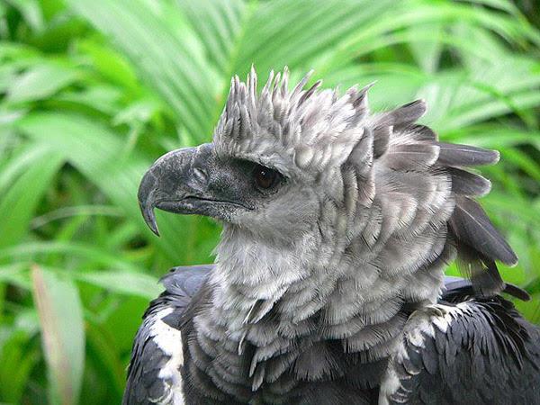 24 mil especies de aves en peligro de extinción