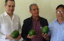 Reino Unido comprará cosecha de aguacate producida en R. Dominicana