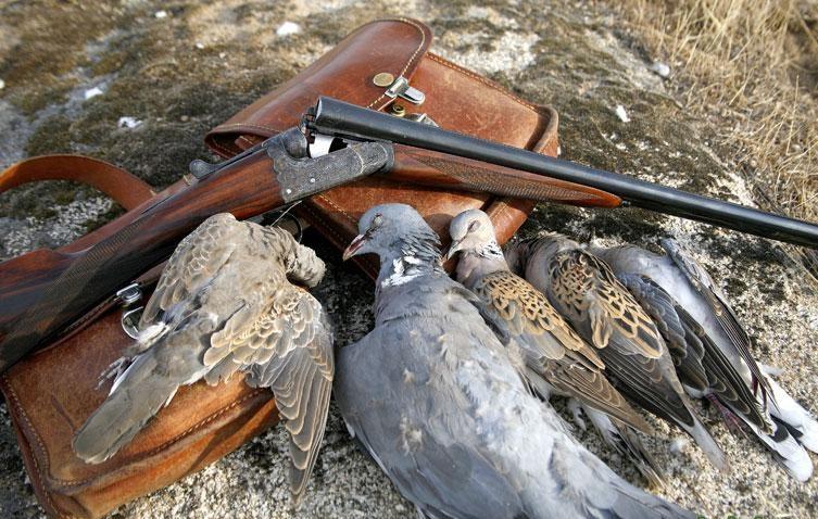 Medio Ambiente prohíbe caza de aves silvestres durante 2 años en Dominicana