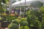 Jardín Botánico inaugura Festival de Plantas y Flores