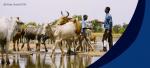 Tratan frenar transmisión de la tuberculosis bovina
