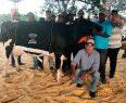 SABANETA: Subastan vaca por 650 mil pesos en Expomontaña 2018