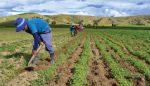 Gobierno asigna 500 millones en créditos productores agropecuarios