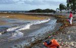 Las algas vuelven masivamente a playas de la República Dominicana