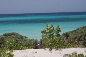 Juez reconoce al Estado titularidad parcela en Bahía de las Águilas