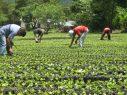 Piden más fondos para Ministerio de Agricultura