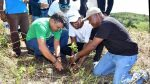 Clubes de Leones sembrarán árboles en América Latina y la RD