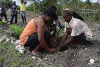 FAO solicita US$20 millones para apoyar alimentación en Haití