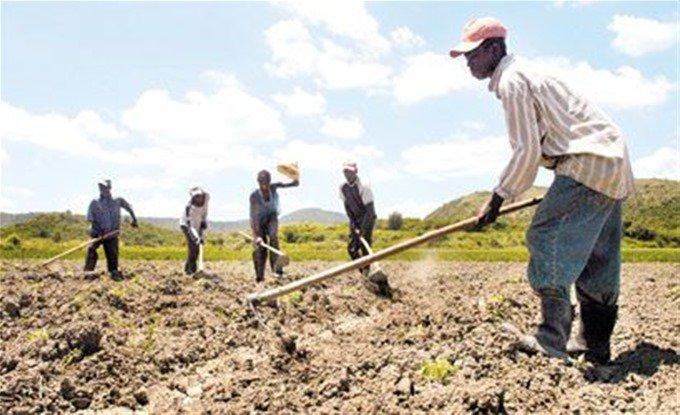 Dicen si continúan repatriaciones, desaparecería agricultura en SJM