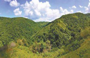 La superficie forestal de la R.Dominicana representa 43,6 % de todo el territorio