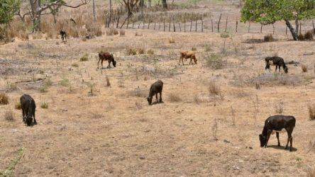 ONAMET revela se agravan niveles de sequía por falta de lluvias en la RD