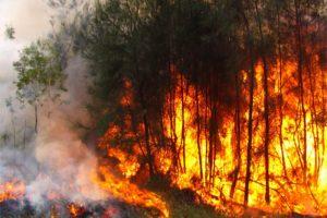 Incendio forestal causa estragos en Nueva Jersey