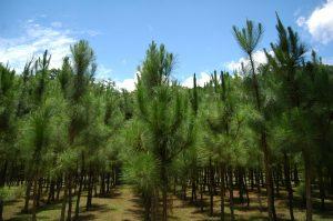 RD logra avances en preservación medioambiental, dice el Instituto Legatum