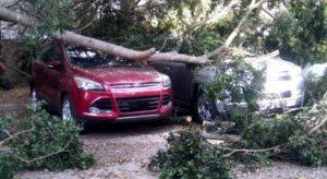 SANTIAGO: Turbonada derriba árboles, daña autos en localidades del Cibao