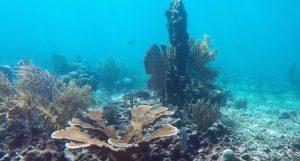 Costa Rica y RD impulsan conservación de arrecifes