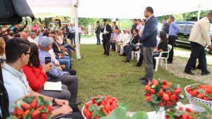 Danilo financia productores fresas de Jarabacoa y a cafetaleros de Villa Trina