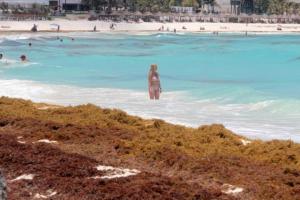 Informe Turístico: Algas se diseminan playas de La Florida