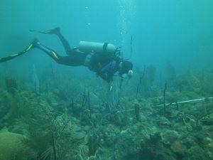 Costa Rica ayuda a R. Dominicana en restauración de arrecifes coralinos