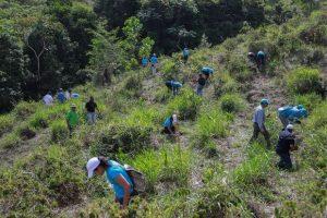 Grupo Popular participa en regeneración boscosa cuenca del Ozama