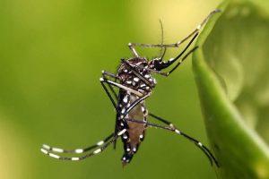 Confirman veintena de casos de dengue en Haití
