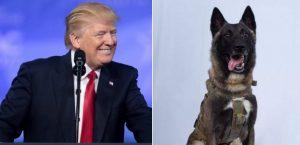 "Donald Trump ""desclasificó"" imagen perro participó en muerte Abu Bakr"