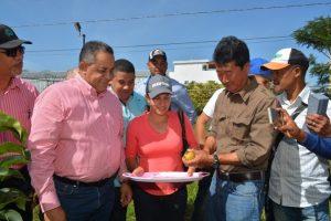 Cosechan en proyecto IAD primera producción de peras japonesas en el país