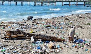 Haina insiste en su descontaminación y en recobrar atractivo cultural