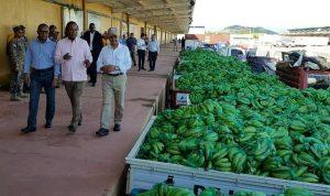 Miles se benefician de ventas de plátanos y guineos del Gobierno