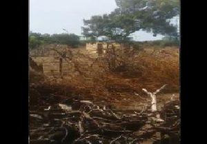 BANI: Obispo Masalle denuncia tala de árboles en Las Dunas