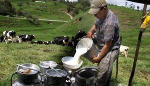 DM emite decreto regula calidad e inocuidad de la leche y derivados