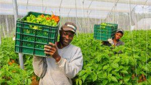 Destacan apoyo del Presidente para relanzar tecnología agropecuaria