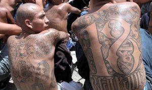 NUEVA YORK: Autoridades arrestan cien pandilleros de Mara Salvatrucha