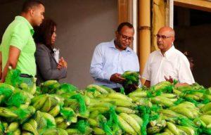 Agricultura beneficia a 430 mil personas con ventas de plátano y guineo