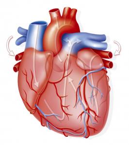 Prevención y moderación para mantener el corazón saludable en Navidad
