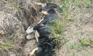 MAO: Suspenden empleado UASD acusado envenenar varios perros