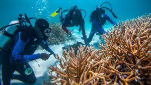 Proyecto corales Fundación Puntacana recibirá ayuda Fondo Biodiversidad