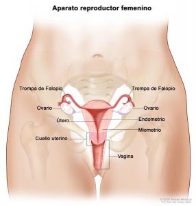 Sugieren desde los 21 años prueba anual de cáncer de cuello uterino