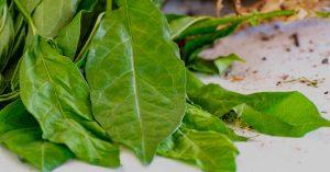 Catedráticos de la R. Dom. proponen plantas medicinales contra Covid-19