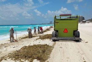 El sargazo vuelve en junio a costas mexicanas del Caribe