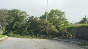 Ventarronesderriban árboles, postes y dejan sin electricidad el Cibao