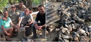 Matan cientos de «patos de La Florida» en zona costera provincia Montecristi