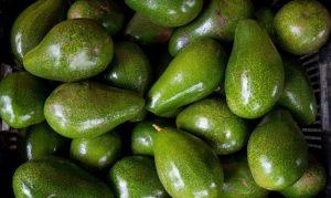 El aguacate dominicano contará con su marca exportación a Estados Unidos