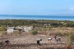 Organizaciones campesinas denuncian acaparamiento de tierras en Haití