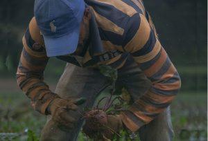 Unos 150 productores agropecuarios  en proyecto criollo que triunfa en EU