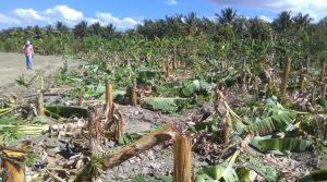 Alianza País denuncia abuso contra agricultores en municipio de Tamayo