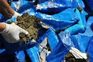 Policía de Haití decomisó unos dos mil kilogramos de marihuana