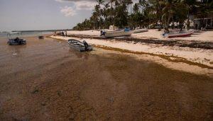 Una marea de sargazo inunda las cristalinas playas dominicanas