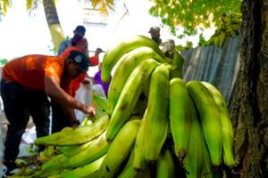Inespre anuncia venta de plátanos a peso en mercados productores